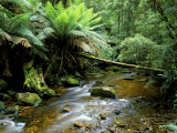Nelson Creek, Franklin Gordon Wild Rivers National Park, Tasmania, Australia Fotografie-Druck von Rob Tilley