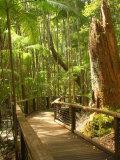 Boardwalk by Wanggoolba Creek, Fraser Island, Queensland, Australia Fotografie-Druck von David Wall