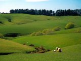 Farmland Near Clinton, New Zealand Photographic Print by David Wall