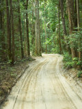 Sandy Road, Fraser Island, Queensland, Australia Photographic Print by David Wall