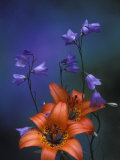 Wood Lily and Harebells, St. Ignace, Michigan, USA Photographic Print by Claudia Adams