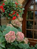 Geraniums and Hydrangea by Doorway, Chateau de Cercy, Burgundy, France Papier Photo par Lisa S. Engelbrecht
