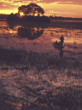 Mokoro and Guide, Botswana Photographic Print by Stuart Westmoreland
