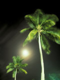 Tropics Palm Trees and Moon Fotodruck von Robin Hill
