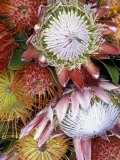 Protea Flower Design, Maui, Hawaii, USA Photographic Print by Darrell Gulin