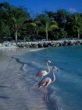 Sonesta Island, Aruba, Caribbean Fotografie-Druck von Robin Hill