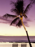 Palm Tree and Indian Ocean at Dusk, Maldives Photographic Print by Michele Westmorland