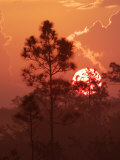 Pines Silhouetted at Sunrise, Everglades National Park, Florida, USA Photographic Print by Adam Jones