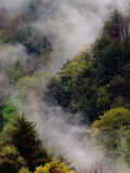 Mist Rising After Spring Rain in the Great Smoky Mountains National Park, Tennessee, USA Photographic Print by Adam Jones