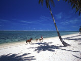Horses on Beach, Tambua Sands Resort, Coral Coast, Fiji Photographic Print by David Wall