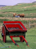 Farm Animals and Wheelbarrow, Kilmuir, Isle of Skye, Scotland Photographic Print by Gavriel Jecan
