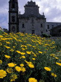Baroque Style Cathedral and Yellow Daisies, Lipari, Sicily, Italy Photographic Print by Michele Molinari
