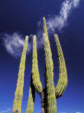 Saguaro Cactus, Catavina Desert National Reserve, Baja del Norte, Mexico Photographic Print by Gavriel Jecan