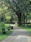 Charleston, South Carolina, USA Fotografie-Druck von Adam Jones