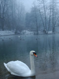 A Swan Swims on the Water in a Park Near Sarajevo Photographic Print