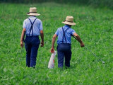 Two Amish Boys Walk with Their Golf Clubs Through a Field of Soy Beans Photographic Print
