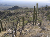 Rugged Slopes of Sabino Canyon Photographic Print