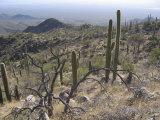 Rugged Slopes of Sabino Canyon Photographic Print