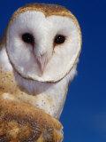 Barn Owl Fotoprint van Russell Burden