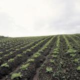 Cultivated Farm Land Reprodukcja zdjęcia