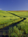 Road Thru Green Wheat Field, Palouse, Washington, USA Photographic Print by Terry Eggers