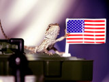 A Juvenile Bearded Dragon Places a Claw Upon an United States Flag Photographic Print