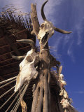 Old Cattle Skulls, Baja California, Mexico Photographic Print by Walter Bibikow