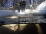 A Man, 64, Swims Underwater in a Hole in the Ice Photographic Print