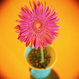 Pink Flower in Green Vase Photographie par Vito Aluia
