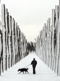 A Russian Girl Walks Her Dog Photographic Print