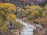 Virgin River and Fremont Cottonwoods, Zion National Park, Utah, USA Photographic Print by Jamie & Judy Wild