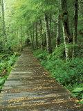 Trail of the Shadows, Mt. Rainier National Park, Washington, USA Photographic Print by Jamie & Judy Wild