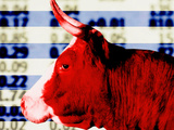Bull in Front of Stock Market Quotes Photographic Print