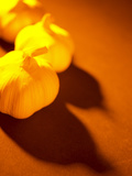 Three Heads of Garlic on Orange Surface Photographic Print