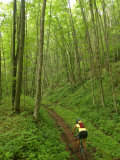Mountain Biker on Props Run, a Single Track Trail Fotoprint van Skip Brown