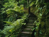 Stone Steps and a Path Cut Through Dense Jungle and Palm Trees Impressão fotográfica
