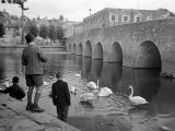 Children Feeding Swans at Bradford on Avon, October 1943 Photographic Print