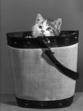 Small Kitten Hides in a Bucket Gazing up at the Photographer Photographic Print by Thomas Fall
