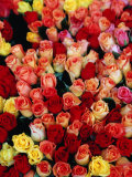 Roses for Sale at a Morning Market on Cours Saleya in the Old Town, Nice, France Fotografie-Druck von Richard I&#39;Anson