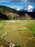 Rice Paddies, Aguid, Philippines Photographic Print by Pershouse Craig
