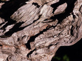Wood Texture on Tree in the Mountains of Lazio Italy Photographic Print