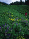 Hiking in the Coastal Hills Near Homer, Alaska Photographic Print by Bill Hatcher