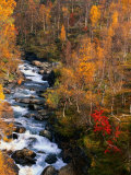 Mountain Stream in Autumn, Vindelfjallen Nature Reserve, Sweden Photographic Print by Christer Fredriksson