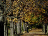 A Man Strolls Through Lazienki Park on a Crisp Autumn Morning in Warsaw, Poland, October 30, 2006 Photographic Print by Czarek Sokolowski