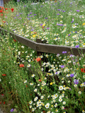 Colourful Planting of Wildflowers Photographic Print by Ron Evans