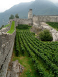 Castelgrande Vineyards and Fortified Walls, Bellinzona, Switzerland Photographic Print by Lisa S. Engelbrecht