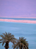 Palms over Dead Sea, Dead Sea, Israel Photographic Print by Nik Wheeler