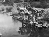 Group of Children Fishing with Nets in a Country Stream Impressão fotográfica