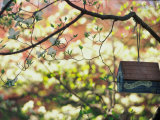 Backyard Bird Feeder, Birdhouse and Spring Flowers Photographic Print by Gayle Harper