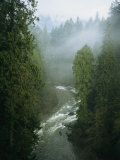 A Salmon Spawning River Runs Through a Temperate Rainforest Photographic Print by Taylor S. Kennedy